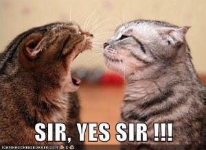 sir yes sir